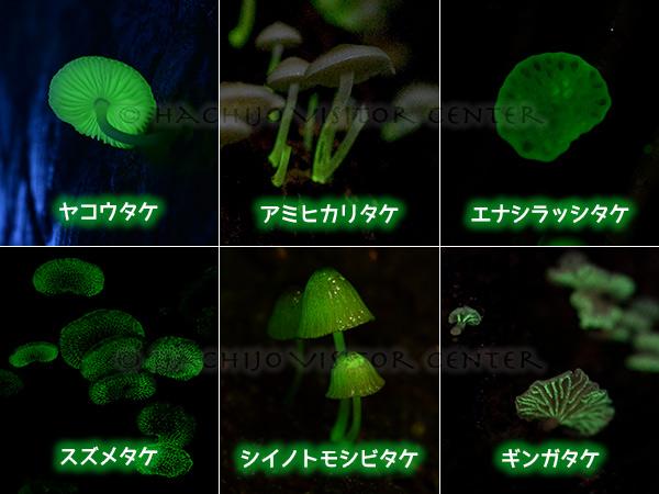 光るキノコ6種